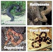 Snakes to stay away from!
